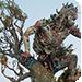 tn_original-sculpt